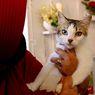 Tak Kalah Gemas, Ini 5 Alasan Mengapa Perlu Memelihara Kucing Kampung