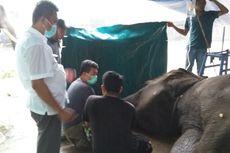 Kronologi Kematian Gajah Yanti di Taman Rimba Jambi, Sulit Makan hingga 2 Dugaan Penyebabnya