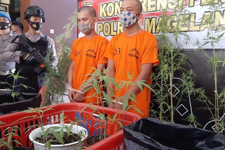 Dua pemuda diamankan aparat Polres Magelang, Jawa Tengah, atas kepemilikan narkotika golongan I yang disebut ganja atau mariyuana.