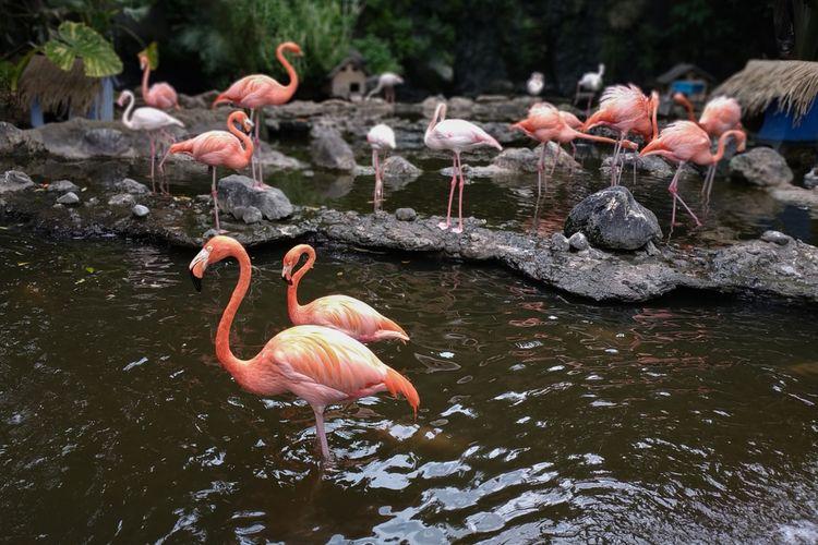 Kolam flamingo, salah satu spot di Jatim Park 2.