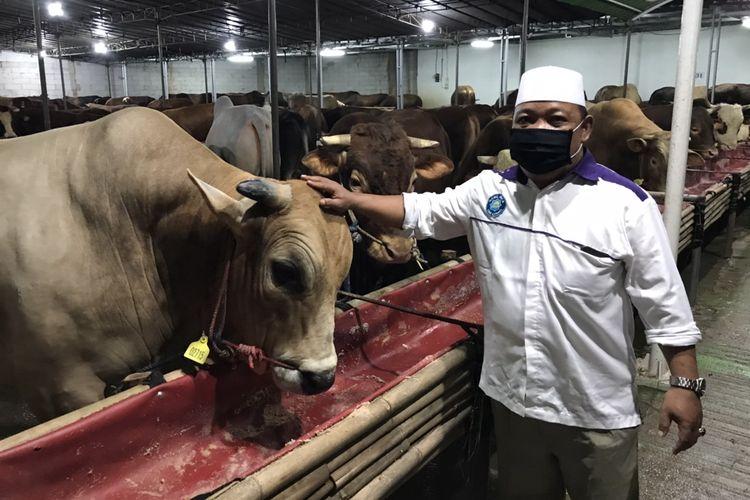 Marketing Sumiland Farm, Arpan Dadi menunjukkan sapi limosin yang ada di lapaknya di Jalan Raya Lenteng Agung, Jagakarsa, Jakarta, Kamis (9/7/2020). Pedagang sapi kurban di sekitar Jalan Raya Lenteng Agung mulai berjualan sejak awal Juli 2020.