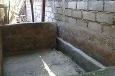Hoaks, Pesan Berantai 8 Babi di Denpasar Mati karena African Swine Fever