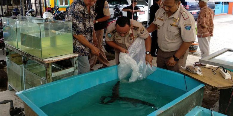 Ikan Aligator Ditemukan Dijual Bebas Di Palembang Halaman All Kompas Com