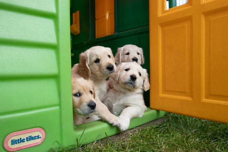Penting untuk menyediakan anjing peliharaan memiliki tempat nyaman untuk tidur dan bebas dari gangguan lingkungan.