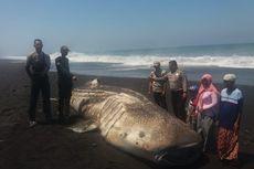 Hiu Paus 6 Meter Terdampar di Pantai, Sempat Bergerak Lalu Mati