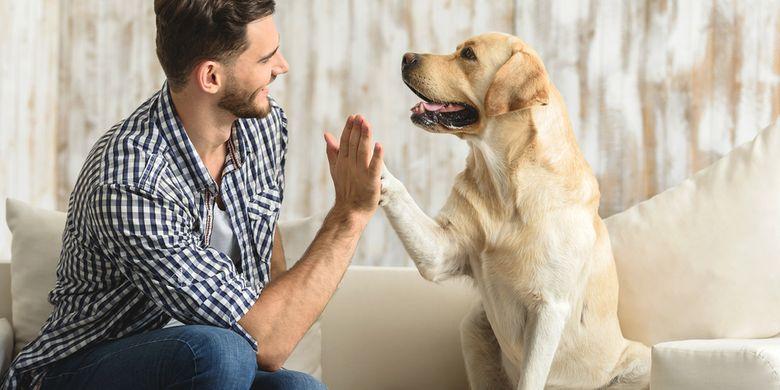 6 Hal Yang Harus Diperhatikan Sebelum Mengadopsi Anjing Halaman All Kompas Com