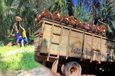 Karyawan Perkebunan Sawit di Perbatasan Indonesia-Malaysia Bacok Istri dan 2 Rekannya