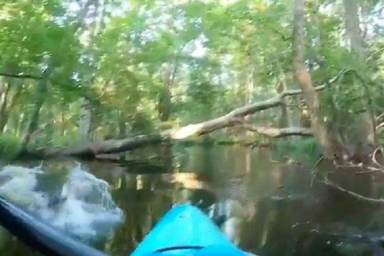 Potongan rekaman video memperlihatkan seekor alligator menyundul kayak sebelah kiri Peter Joyce ketika dia mendayung di North Carolina, Amerika Serikat.