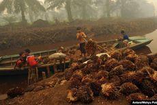 Sanksi Pidana Penggunaan Lahan di Kawasan Hutan Diganti Denda Administratif, Ini Respons Asosiasi Sawit