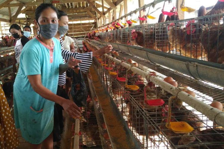 Warga di sekitar kandang milik Hardi, terlihat antusias dalam mengambil telur yang disedekahkan.