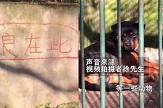 Kandang Serigala Ternyata Isinya Anjing, Kebun Binatang China Ini Jadi Sorotan