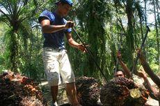 Wamendag: Praktik Berkebun Sawit di Indonesia Sudah Ramah Lingkungan
