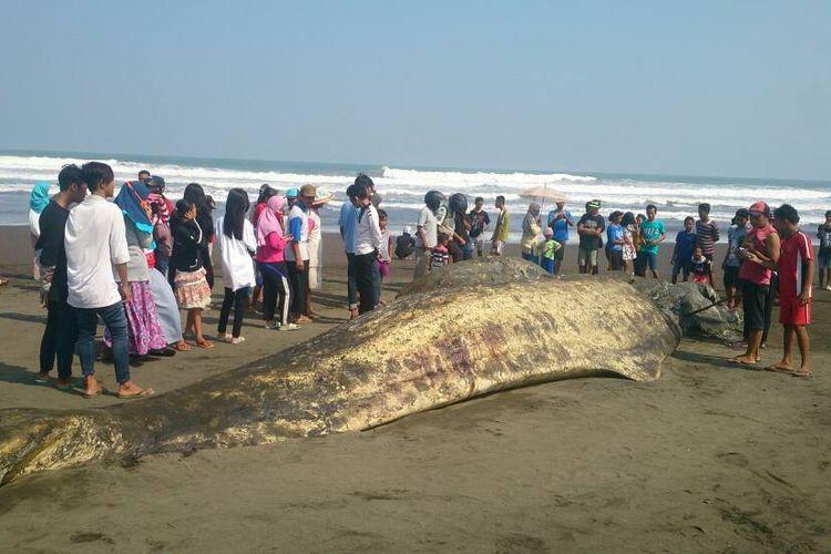 Warga menonton bangkai paus berukuran panjang 20 meter yang terdampar di Pantai Bunton, Kecamatan Adipala, Cilacap, Jawa Tengah, Rabu (7/6/2017).
