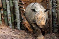 Polemik Kementerian LHK-WWF Indonesia dan Nasib Konservasi Alam...