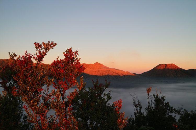 Mengejar Pesona Sunrise Gunung Bromo Dari Bukit Mentigen Halaman