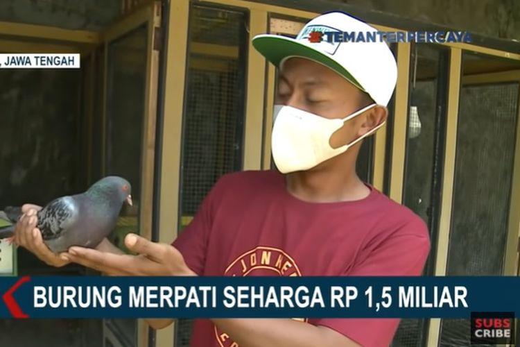 Muhammad Joned, peternak merpati kolong di Pekalongan, Jawa Tengah.