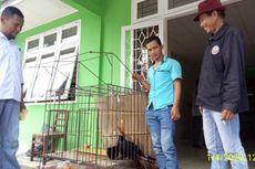 Cerita Petani Selamatkan Burung Langka Rangkong Badak yang Jatuh dari Langit