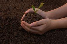 Yuk, Mulai Berkebun untuk Atasi Bosan Selama Karantina