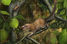 Nenek Moyang Manusia Hidup Berdampingan dengan Dinosaurus, Ini Buktinya