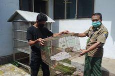 BKSDA Jember Evakuasi Dua Ekor Kucing Hutan di Kaki Gunung Argopuro