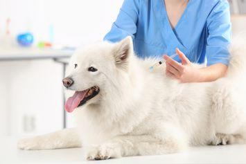 Apakah Kucing dan Anjing Butuh Vaksin Covid-19 Khusus?