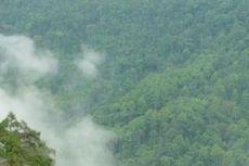 Ketua Komisi IV Sebut KLHK Berkontribusi pada Kerusakan Hutan