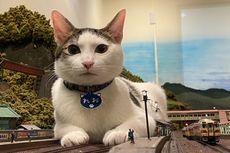 Restoran di Jepang Tidak Jadi Tutup karena Foto Kucing yang Viral