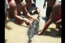 Lumba-lumba yang Mulutnya Terlilit Benang Plastik Terdampar di Pantai Sulbar