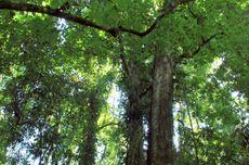 Mengapa Indonesia Memiliki Keanekaragaman Hayati?