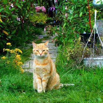Ilustrasi kucing di taman di rumah.
