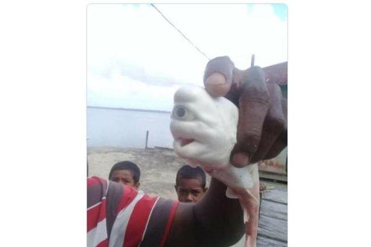 Viral Foto Hiu Putih Mata Satu Diklaim di Maluku, Benarkah?