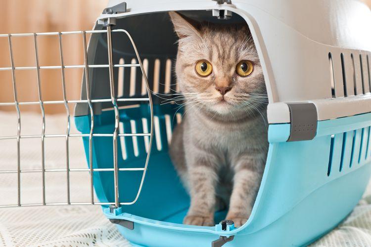 Ilustrasi kucing di dalam kandang, kandang kucing