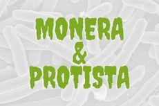 Perbedaan Monera dan Protista