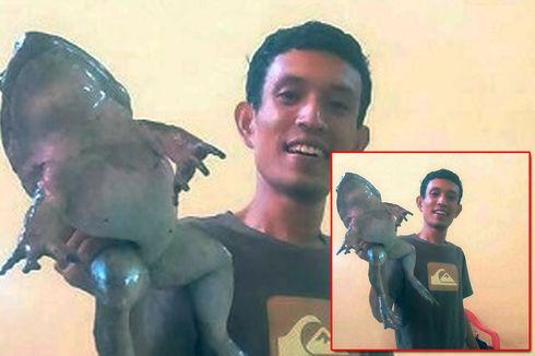 25 Jenis Katak Raksasa Tersebar di Indonesia, Ini yang Teristimewa