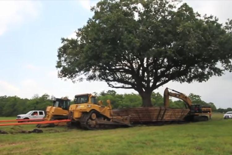 Proses pemindahan pohon ek berusia 100 tahun di Kota League, Texas, Amerika Serikat