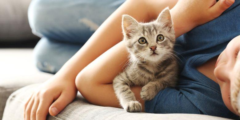 Ide Nama Lucu Kucing Peliharaan Beserta Artinya Halaman All Kompas Com