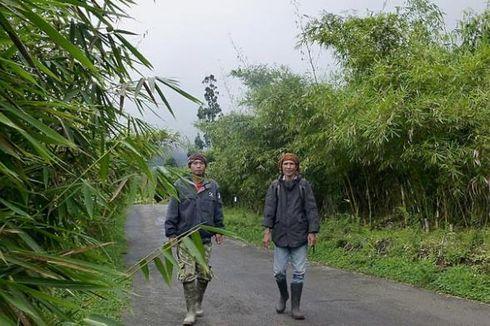 Melestarikan Alam dengan Tanaman Bambu