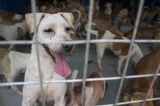 Perdagangan Anjing dan Kucing di Indonesia Disorot di Eropa