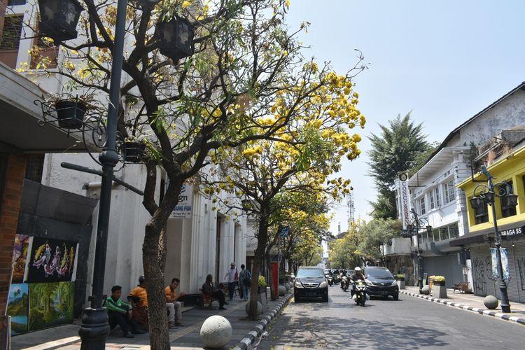 Tampak Bunga Tabebuya Bermekaran di Jalan Braga. Iklim kemarau di Kota Bandung menjadikan Bunga Tabebuya bermekaran, hal ini menjadi daya tarik wisata di Kota Bandung.
