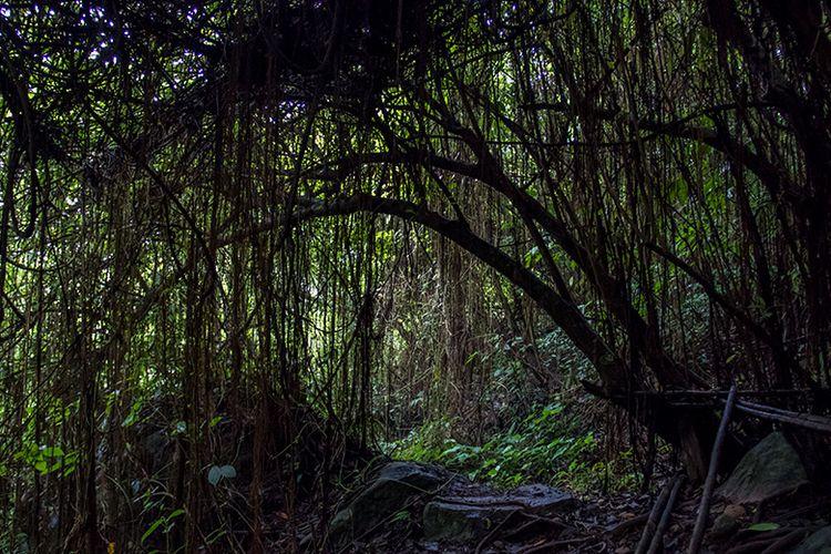 Jalan setapak di tengah hutan menuju Air Terjun Muncar Wonogiri.