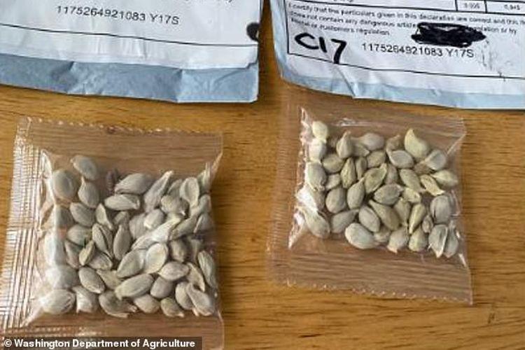 USDA mengatakan bahwa paket benih yang tidak diminta tampaknya berasal dari China.