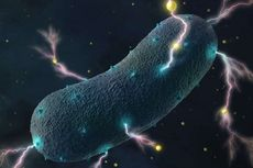 Senyawa Ganja Senjata Ampuh Lawan Bakteri Superbug, Ilmuwan Jelaskan