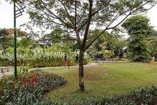 Penebangan Pohon di Jakarta Harus Melalui Izin PTSP