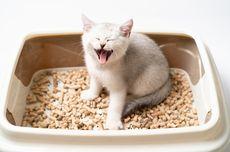 Ciri-ciri Kucing Susah Buang Air Kecil dan Penyebabnya