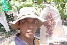 Kisah Walwinsyah Sukses Budidaya Anggur di Pantai Jambi, 20 Tahun Lalu Dianggap Gila, Kini Bibitnya Diminati Mancanegara