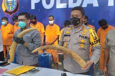 Cerita di Balik Penjualan Gading Gajah Seharga Rp 100 Juta, Gading Diisi Semen agar Lebih Berat