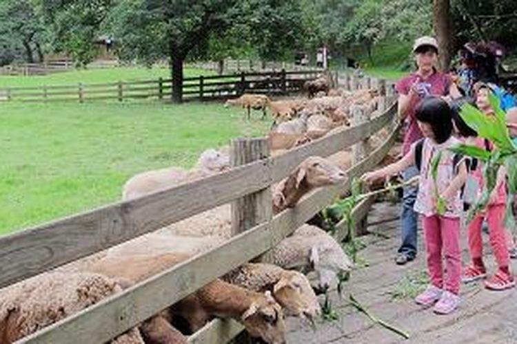 Anak-anak memberi makan kambing di resor pertanian Flying Cow Ranch, Taiwan. Resor pertanian seperti ini menarik anak muda kembali ke desa untuk bekerja atau belajar mengenal alam.