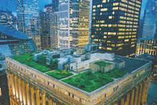 Atap Hijau Bisa Turunkan Suhu hingga 60 Persen