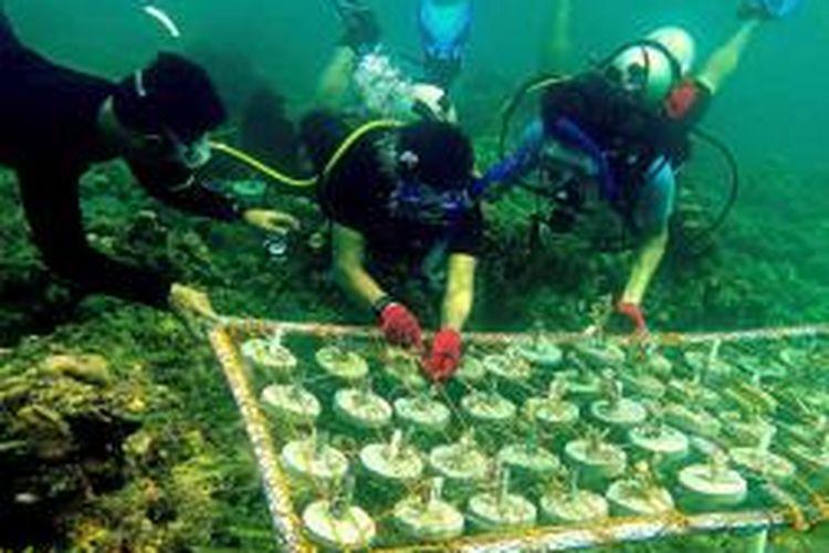 Inilah aktivitas anggota Kolaka Diving Club (KDC) saat melakukan proses transplantasi karang di perairan Kolaka.