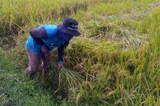 Mendorong Investasi dari Sektor Pertanian